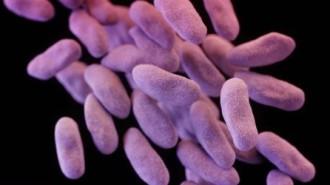 Учени откриха как резистентните бактерии се пазят от антибиотиците