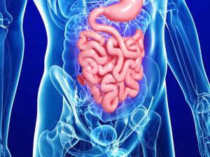 Публикуваха новото фармакотерапевтично ръководство за гастроентерологични заболявания