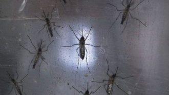Рискът от разпространение на вируса Зика в България е умерен, твърдят учени
