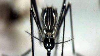 """Комарът-причинител на """"Зика"""" вече е и у нас"""