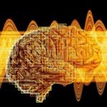 Учени изследваха интересна връзка между човешките черва и мозъка