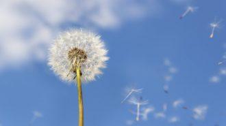 Нараства броят на страдащите от алергии у нас