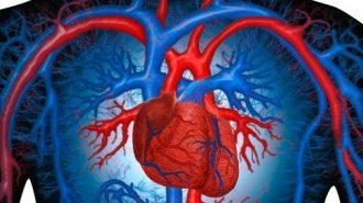 Учени: Един ден ще успеем да регенерираме мускулните клетки в нашето сърце
