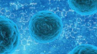 Недостигът на витамин А уврежда стволовите клетки