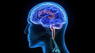 Защо трябва да се грижите за мозъчните си клетки