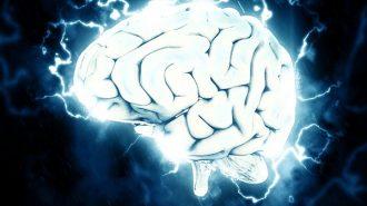 """Отгледаха човешки мозък - не може да """"мисли"""""""